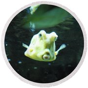 Face Of A Horned Boxfish Swimming Underwater Round Beach Towel