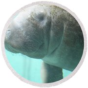 Face Of A Manatee Swimming Underwater Round Beach Towel