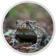 Face To Face With A Fowler Toad  Round Beach Towel