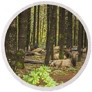 Faces In The Woods Round Beach Towel
