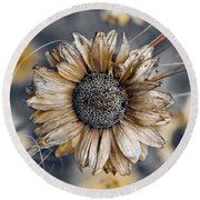 Fading Oxeye Round Beach Towel