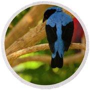 Fairy Bluebird Male Digital Oil  Round Beach Towel