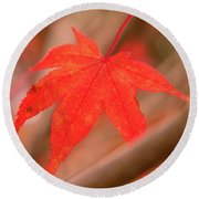 Fall Color Maple Leaves At The Forest In Kamakura, Kanagawa, Jap Round Beach Towel