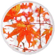 Fall Color Maple Leaves At The Forest In Kumamoto, Japan Round Beach Towel