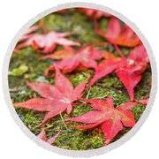 Fall Color Maple Leaves At The Forest In Nikko, Tochigi, Japan Round Beach Towel