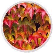 Fall Colored Ivy Round Beach Towel