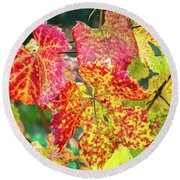 Fall Colors At The Vineyard Round Beach Towel