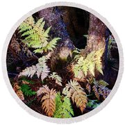 Fall Ferns Round Beach Towel