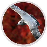 Fall Gull Round Beach Towel