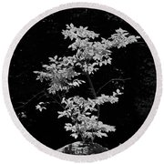 Fall Illumination In B/w Round Beach Towel