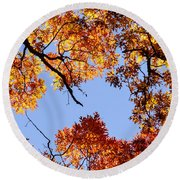 Fall Oak Leaves Up Above Round Beach Towel