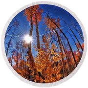 Fall Sun And Trees Round Beach Towel