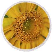 Fall Sunflower Avila, Ca Round Beach Towel
