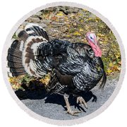 Fall Turkey Round Beach Towel