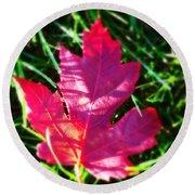 Fallen Maple Leaf Round Beach Towel