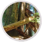 Fallen Redwood Trees Forest Round Beach Towel