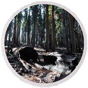 Fallen Sequoia Crescent Meadow Trail Round Beach Towel
