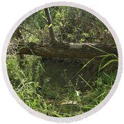 Fallen Tree In Peters Canyon Round Beach Towel