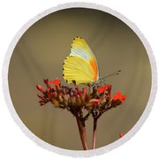 False Dotted Border Butterfly Round Beach Towel