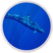 False Killer Whale Round Beach Towel