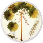 Fan Palm Round Beach Towel
