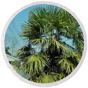 Fan Palm Tree Round Beach Towel