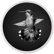 Fantail Hummingbird Square Bw Round Beach Towel