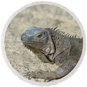 Fantastic Gray Iguana With Spines Along His Back Round Beach Towel