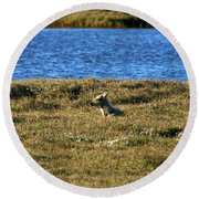 Fawn Caribou Round Beach Towel