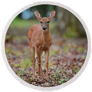 Fawn In Woods At Shiloh National Military Park Round Beach Towel