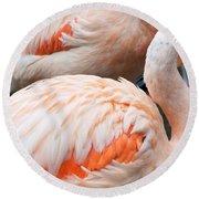 Feathers Of Flamingo Round Beach Towel