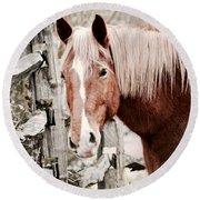 February Horse Portrait Round Beach Towel
