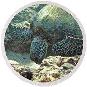 Feeding Sea Turtle Round Beach Towel