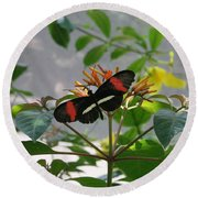 Feeding Time - Butterfly Round Beach Towel