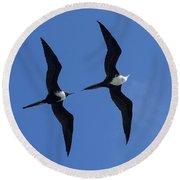 Female And Juvenile Magificent Frigatebird Fregata Magnificens 2 Round Beach Towel