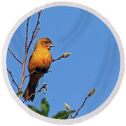 Female Baltimore Oriole Round Beach Towel