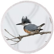 Female Belted Kingfisher On A Cloudy Day Round Beach Towel