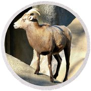 Female Bighorn Sheep Ewe Round Beach Towel