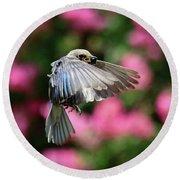 Female Bluebird In Flight Round Beach Towel