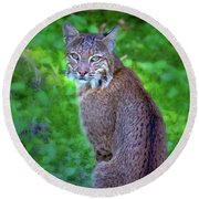 Female Bobcat Round Beach Towel