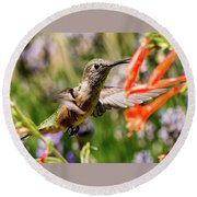 Female Broadtail Humingbird Round Beach Towel