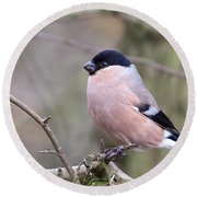 Female Bullfinch Round Beach Towel