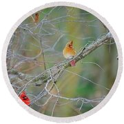 Female Cardinal And Friends Round Beach Towel