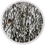 Female Cardinal In The Snow Round Beach Towel