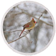 Female Cardinal In Winter Round Beach Towel