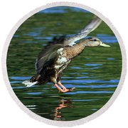 Female Duck Landing Round Beach Towel