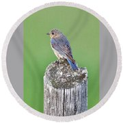 Female Eastern Bluebird 4479 Round Beach Towel