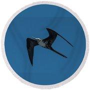 Female Great Frigatebird Flyng Overhead Near Fernandina Island Galapagos Islands Round Beach Towel