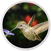 Female Hummingbird And A Small Blue Flower Left Angled View Round Beach Towel