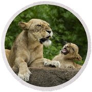 Momma Lion Over Cubs Attitude Round Beach Towel